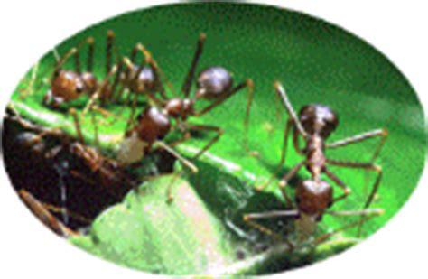 tuin een grote mieren nest mieren bestrijden mieren verdelgen in tuin en huis het