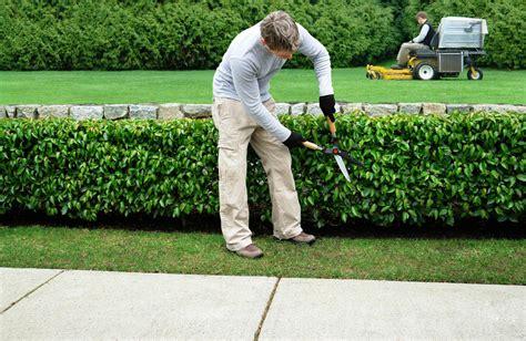 jardinier maubeuge entretien de jardins cambrai