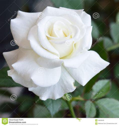 il linguaggio segreto dei fiori pdf il linguaggio segreto dei fiori pdf to word