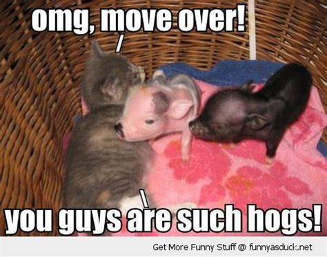 Piglet Meme - bacon quotes with kittens quotesgram