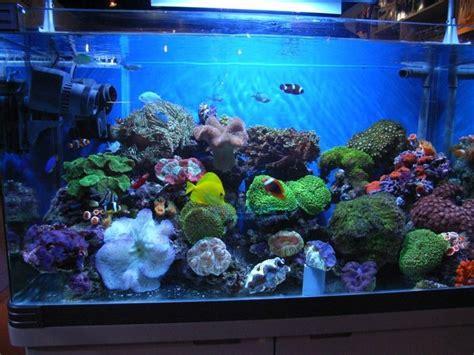 best led light for saltwater aquarium 1000 ideas about led aquarium lighting on