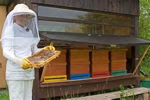 bienen halten im garten bienen halten ein faszinierendes hobby
