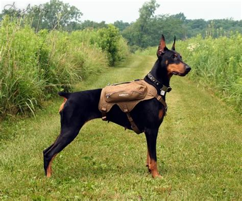 his name was my with a remarkable doberman pinscher books 142 best images about doberman pinscher on