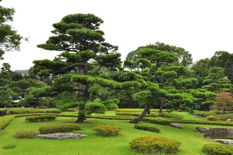 East Garden by Jardin Picture Of The East Gardens Of The Imperial