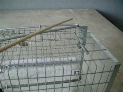 gabbie trappola per uccelli bracconaggio e trappolaggio 2 lezione corso 2010 2011