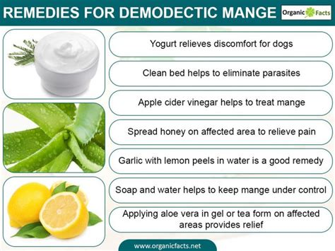 Home Remedies For Mange home remedies for demodectic mange