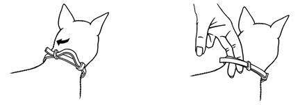 how tight should a collar be how tight should a cat flea collar be cats