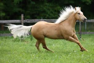 palomino color real colors and equine color genetics