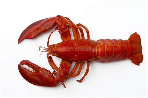 the lobster treat your sweetheart 10