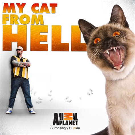 Watch The Cat 2011 Watch My Cat From Hell Episodes Season 6 Tvguide Com