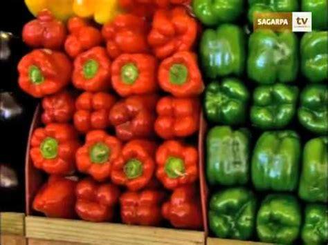 son los alimentos organicos youtube