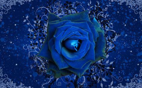 wallpaper flower rose blue blue rose wallpapers wallpaper cave
