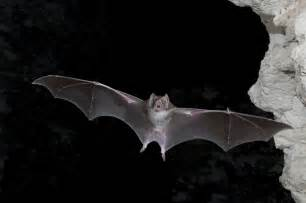 What Time Do The Bats Fly In The Why We Need Bats All The Time