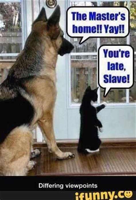 Funny Cat And Dog Memes - 25 best ideas about cat memes on pinterest funny cat