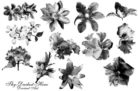 flower brush misc flower brushes by thy darkest hour on deviantart