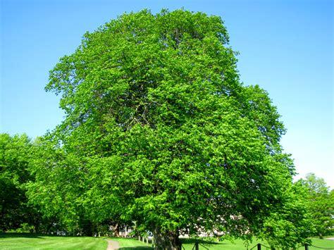 beautiful trees daily meditations beautiful trees