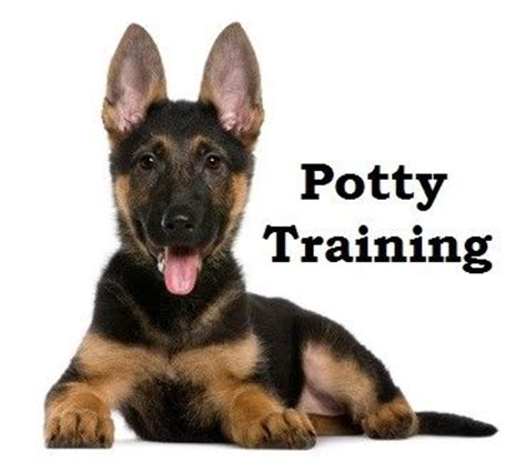 potty german shepherd puppy german shepherd puppies how to potty a german shepherd puppy german shepherd