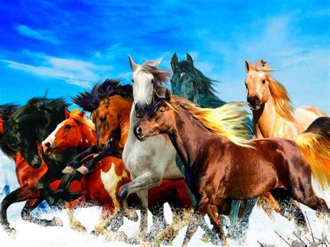 beautiful horses   colors blue sky hd wallpaper