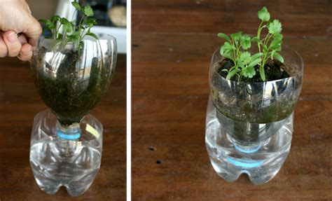 how do self watering planters work homemade self watering pots for herbs it 180 s working