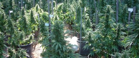 blog     place  grow weed