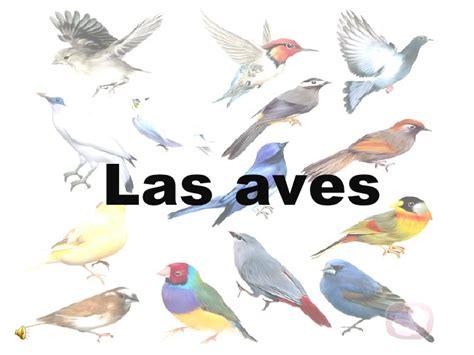 imagenes de animales vertebrados aves las aves