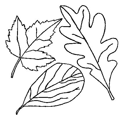 leaf outline coloring page leaf outline template clipart best