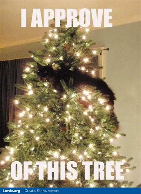 Cat Christmas Tree Meme - cat meme jan 09 2013 17 13 35 picture gallery