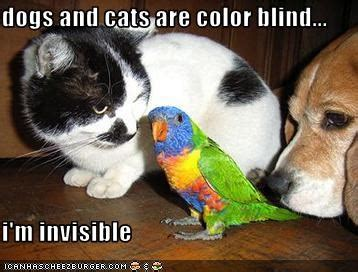 are dogs colorblind siowfa14 science in our world