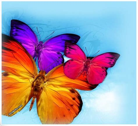 beautiful colorful butterflies www imgkid the