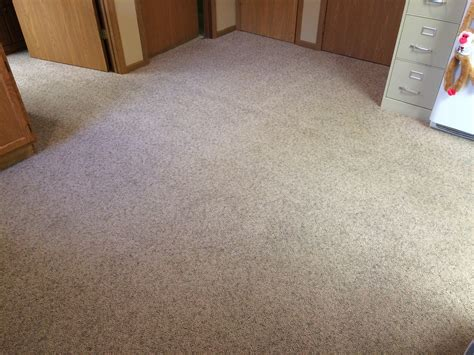 urine out of rug healthy home news february 2017 fort wayne in referral cleaning restoration