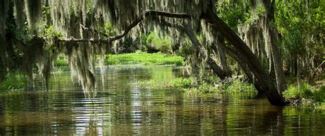 sw boat tours near lafayette la top 5 ways to explore new orleans plantation country