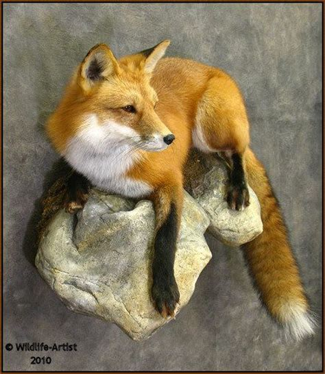 let s learn about unique birds letã s learn about animals books 1000 ideas about taxidermy on cabinet of