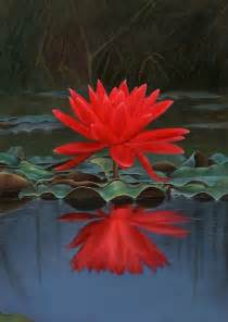 Crimson Lotus Flower Flowers Names With Pictures Flower Images