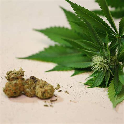 Can Marijuana Help Detox by Can Detox Help Marijuana Addiction