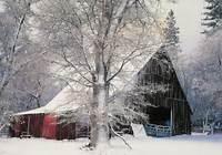 Winter Scenes Of The Season