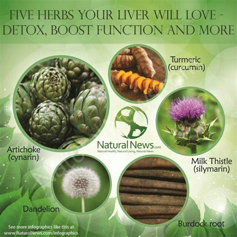 What Herbs Detox Your Liver by Five Herbs For Liver Health Fitness And Wellness Of