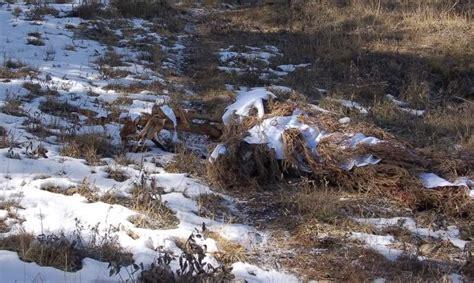 Lu Mata Elang bisakah elu menemukan 7 sniper yang berkamuflase pada foto