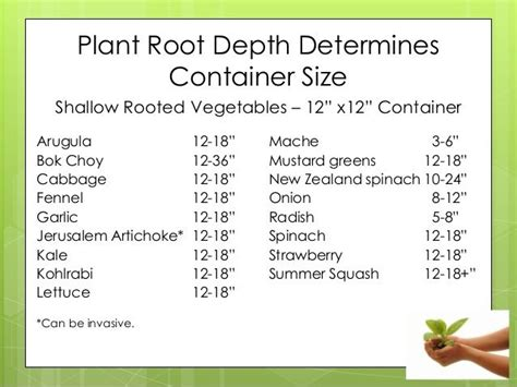 shallow rooted vegetables 25 best ideas about container size on 21 day