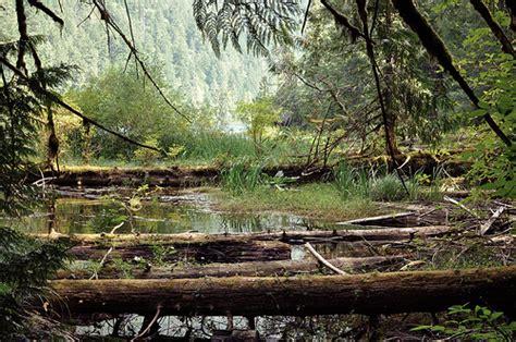 mesozoic era mesozoic era flickr photo sharing
