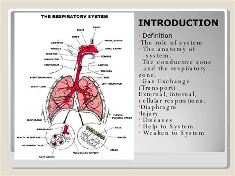 Respiratory Description by The Respiratory System