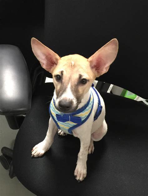 petsmart puppy event petsmart adoption event niles il international foundation
