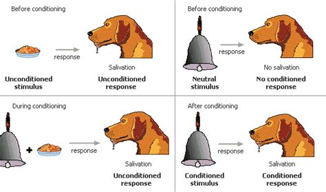 pavlov experiment xavierappsychology chapter 6 period 7