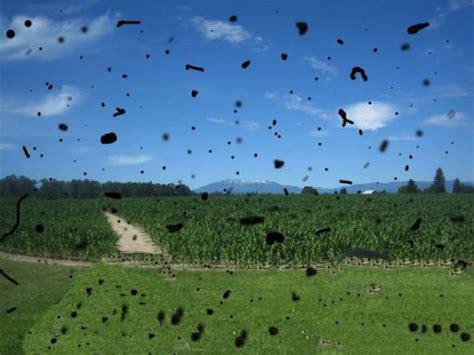 umor vitreo mosche volanti sylvia lakeland melhor vis 227 o orienta 231 245 es do cit