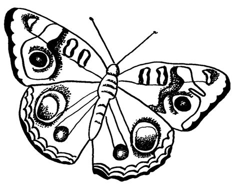 coloring pages of big butterflies butterfly coloring pages free printable butterfly coloring