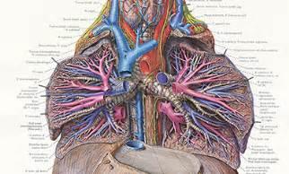 bu bourgery atlas of anatomy 3836556634 sph boston university
