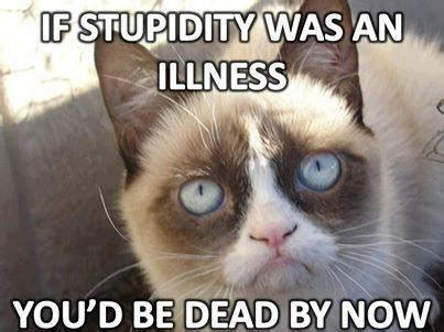 New Grumpy Cat Memes - pointing that s kinda funny a democrat complaining