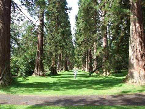 Benmore Botanic Gardens Outdoors Scottishtories