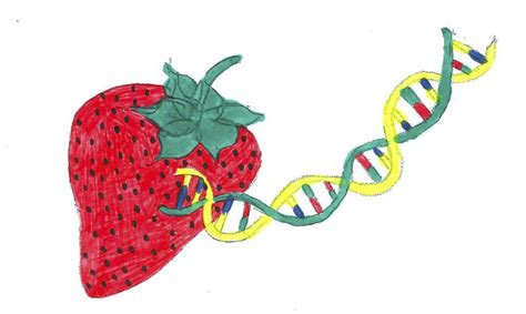 squishy science extract dna from smashed strawberries