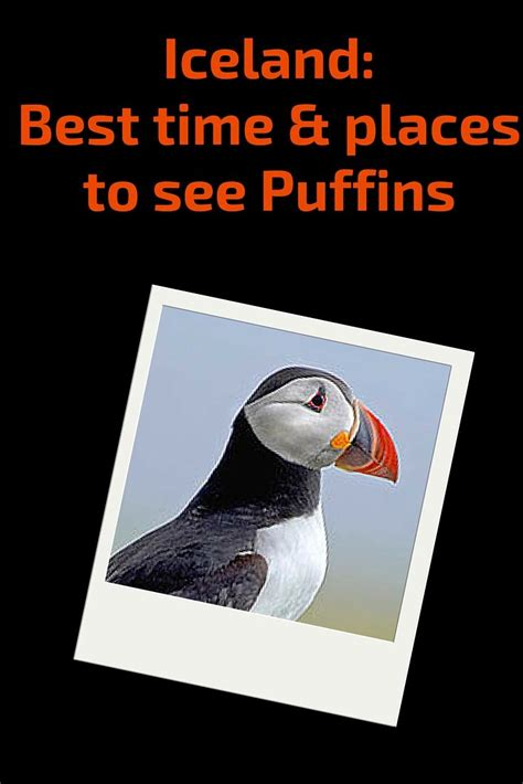 best time to visit iceland for northern lights best time to visit iceland northern lights puffins