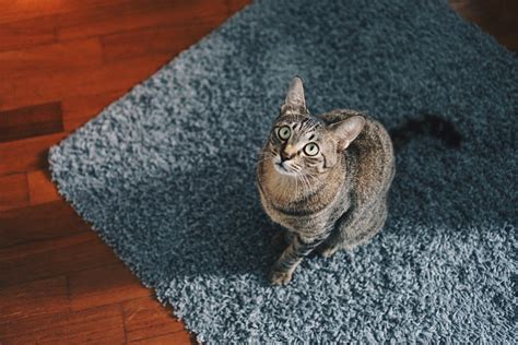 come pulire tappeti come pulire parquet e tappeti senza rovinarli di mina